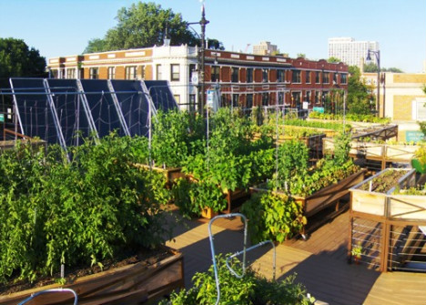 urban agriculture greening the inner city. Black Bedroom Furniture Sets. Home Design Ideas